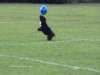 Kick Around with This Soccer Playing Pooch