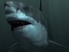 Megalodon: The Greatest Predator That Ever Lived